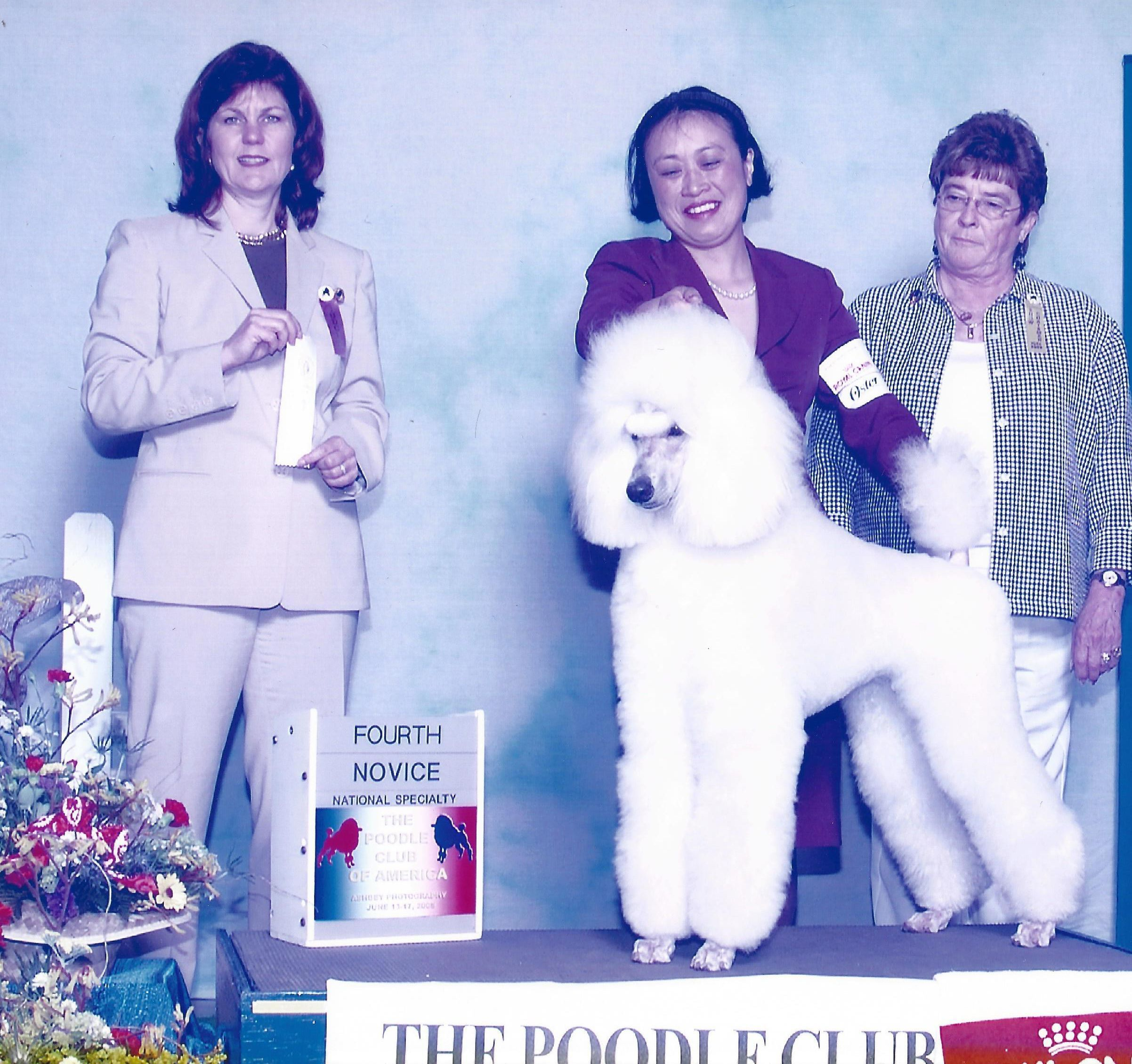 History South Mountain Standard Poodles Is A Home Based Breeding