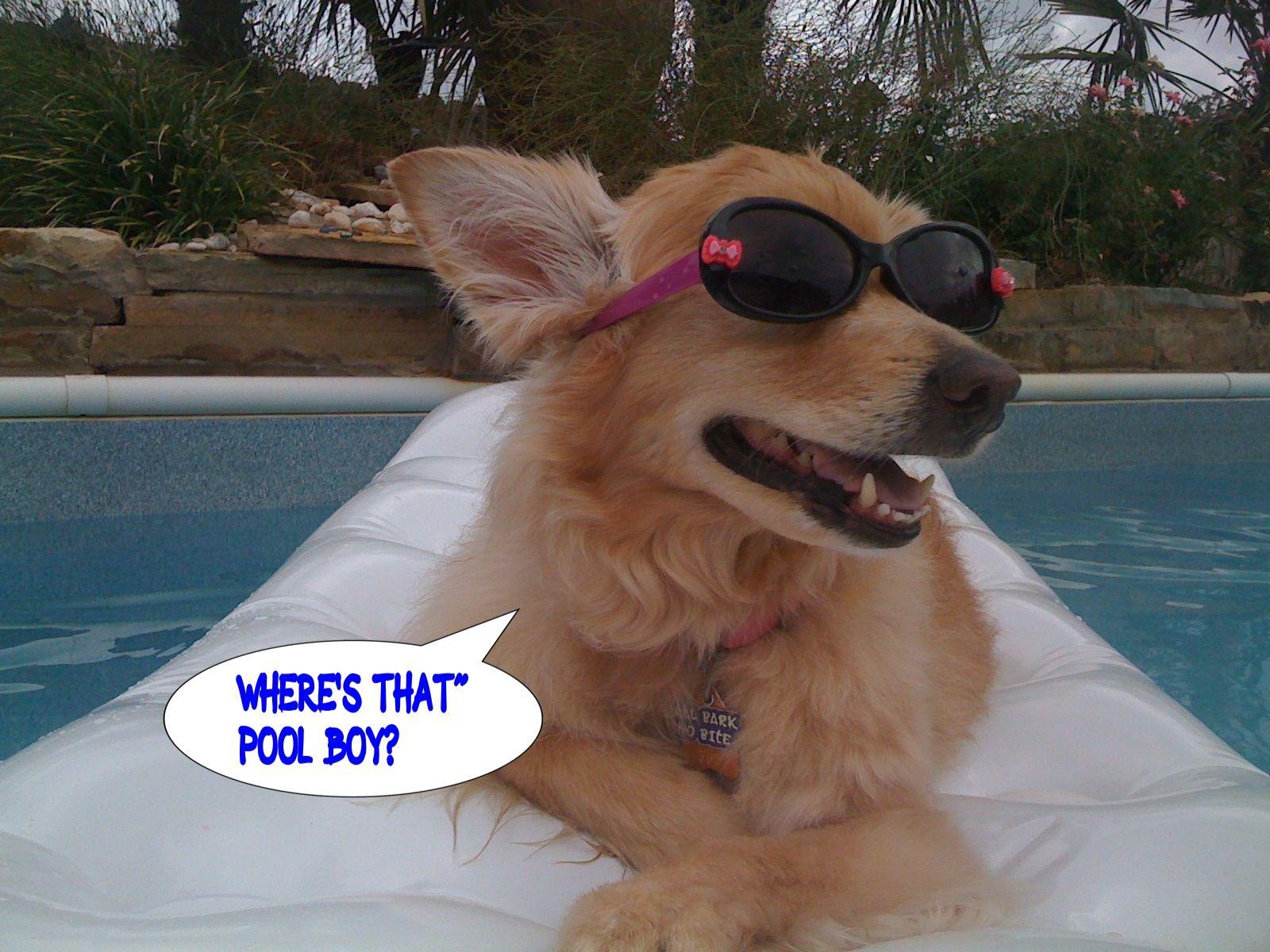 Wheres That Pool
