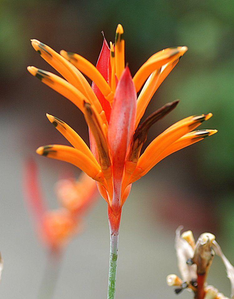 Exotic Orange Flower