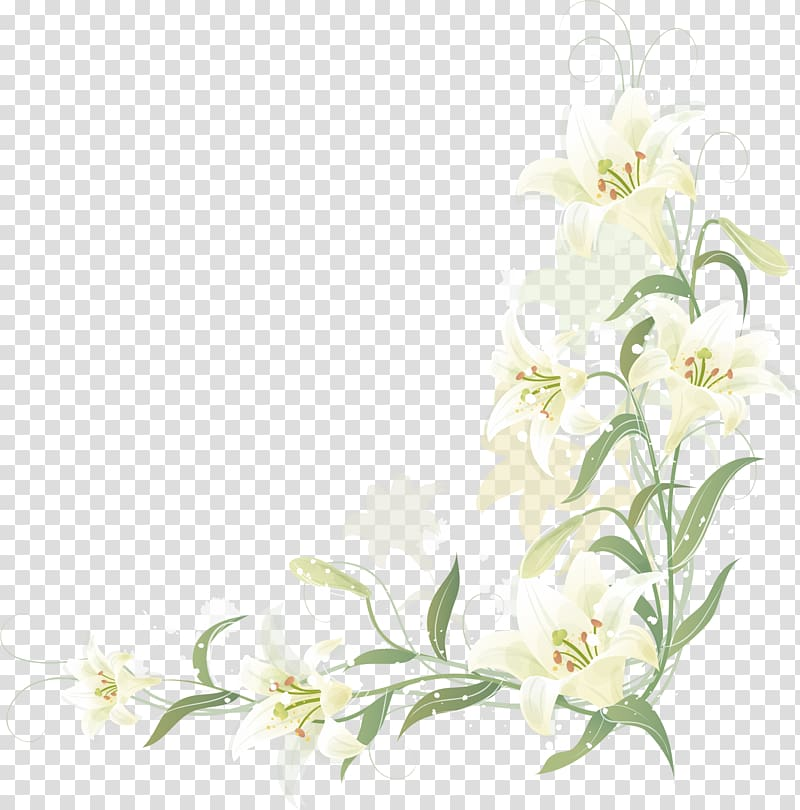 Beautiful White Flower Png Clipart Image White Flower Png Photoshop Flowers Lilies Drawing
