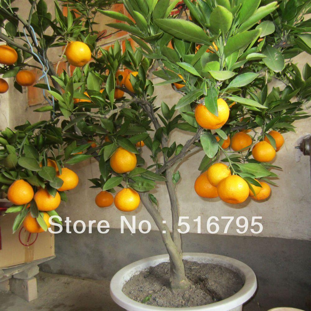 how to make a lemon tree bonsai