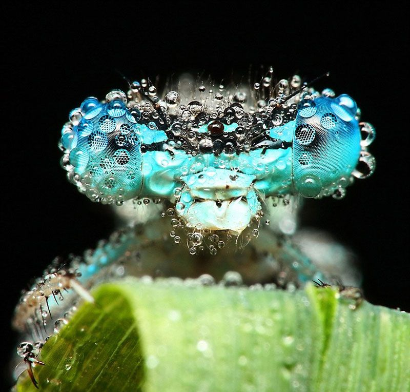 Incredible pics of sleeping insects covered in dew  See more on mudfooted.com