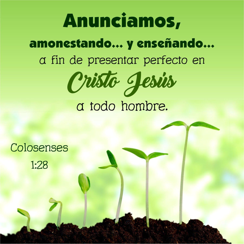 Motivémoslos también a crecer! | La sabiduria, De cristo y Cristo