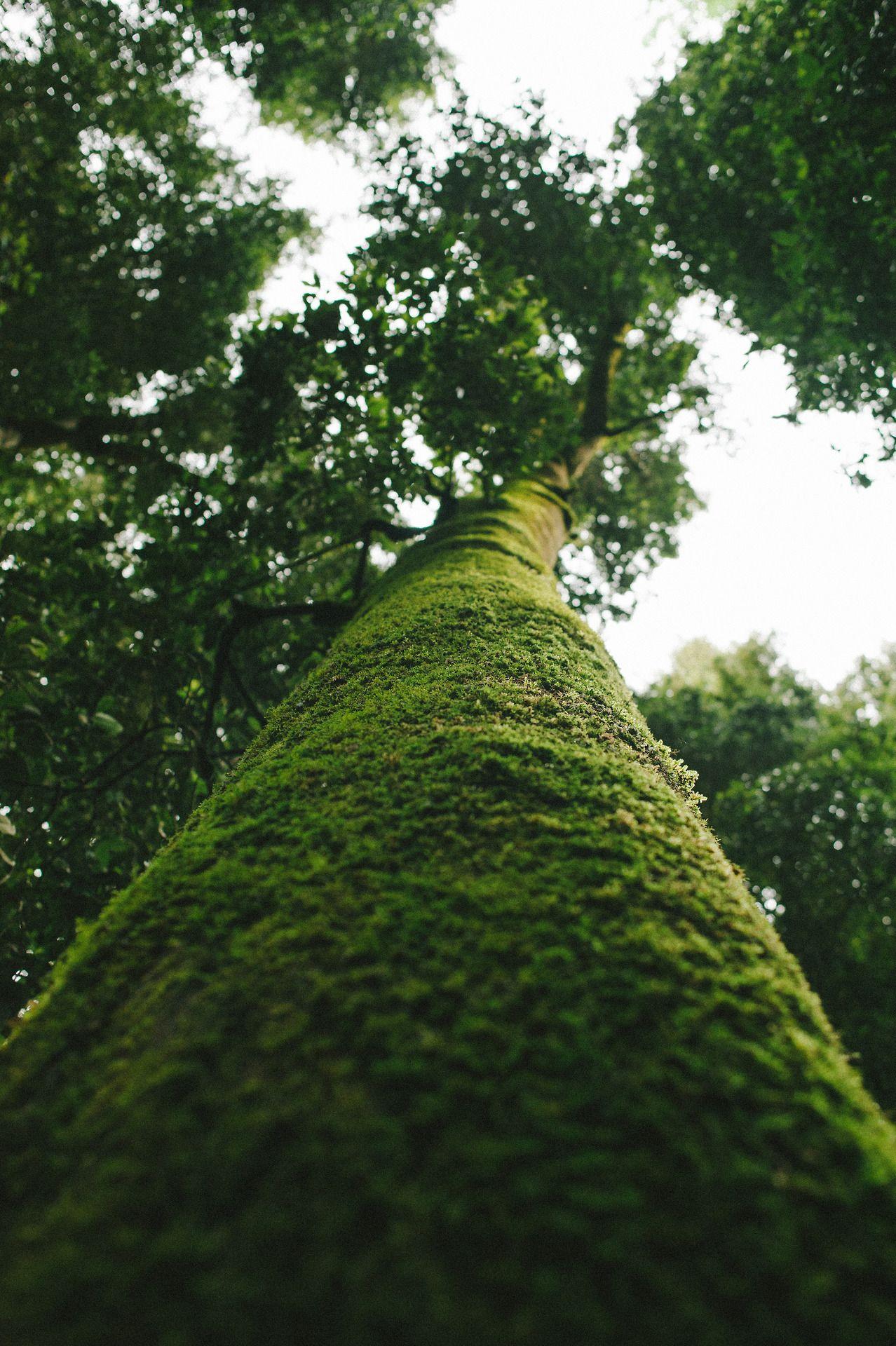 tree to sky view