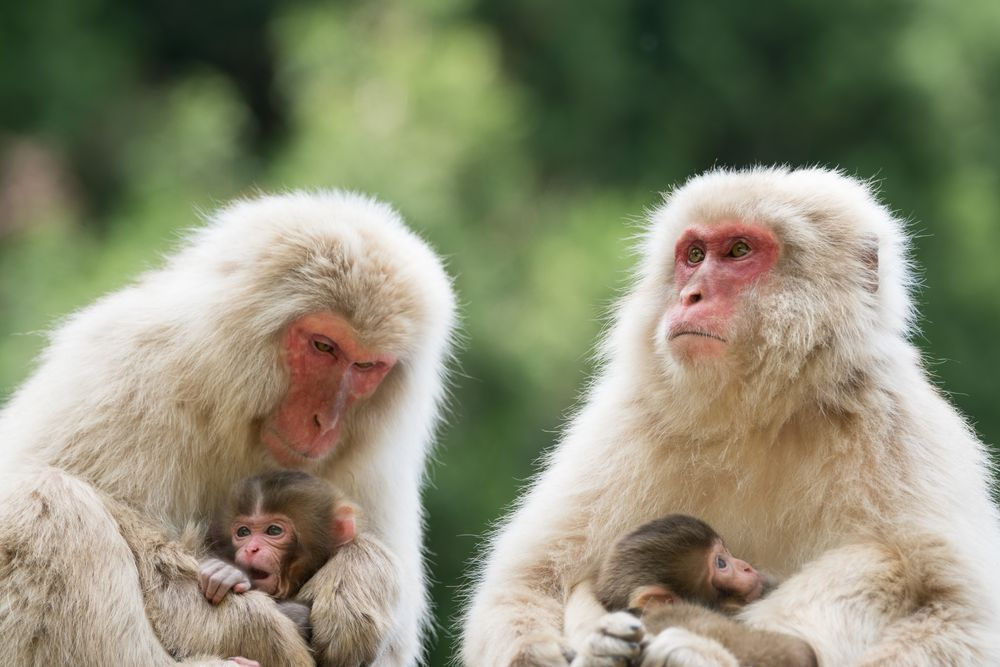 Family Time Photo by Takeshi Marumoto — National Geographic Your Shot