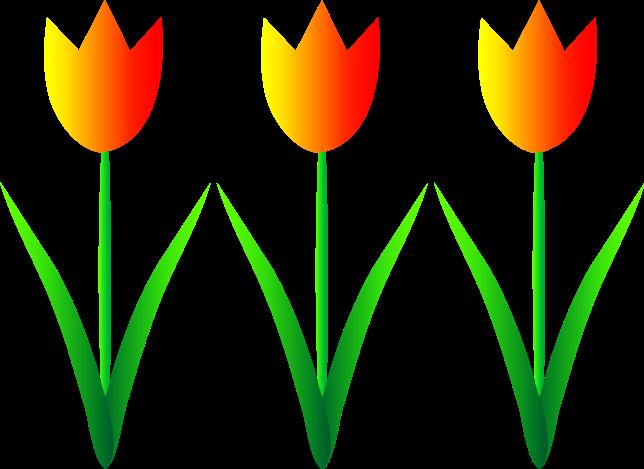 Unduh 5000 Koleksi Gambar Bunga Tulip Simple Paling Cantik