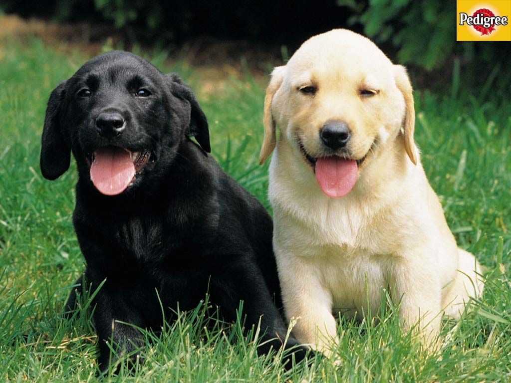 6 More Dog And Puppy Wallpapers From Pedigree Puppy Friends Dogs Animals