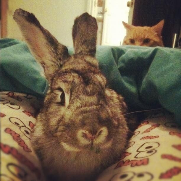 bunny being in possible danger