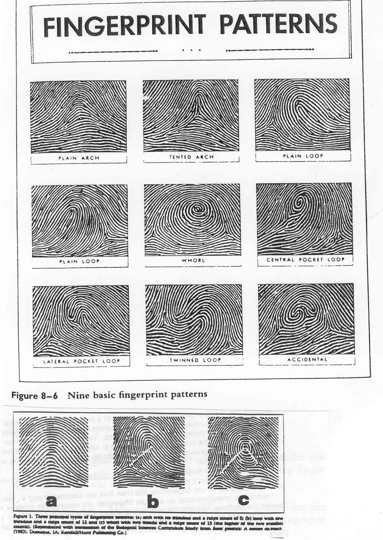 Fingerprints Patterns Very Fascinating