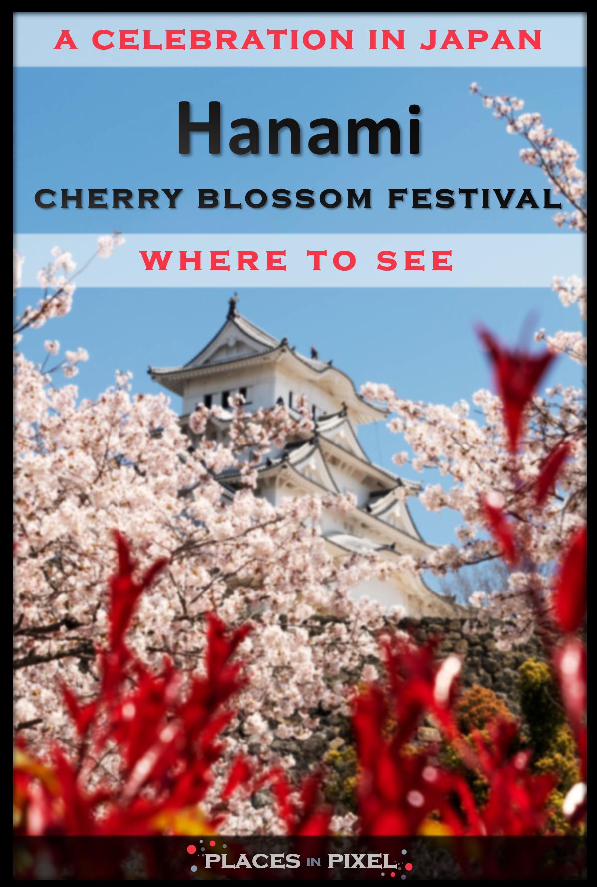 Hanami Cherry Blossom Festival In Japan Japan Cherry Blossom Festival Cherry Blossom Festival Cherry Blossom Japan
