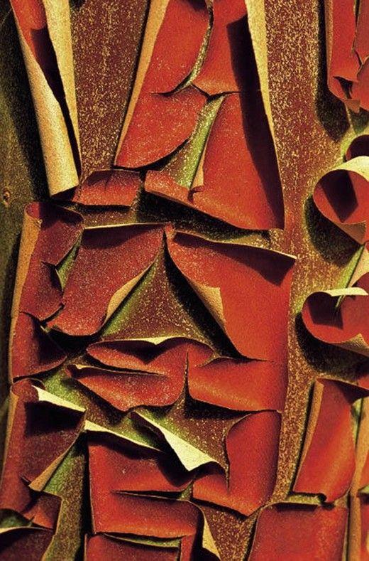 Wonderful Trees | Trees | Texture art, Textured background