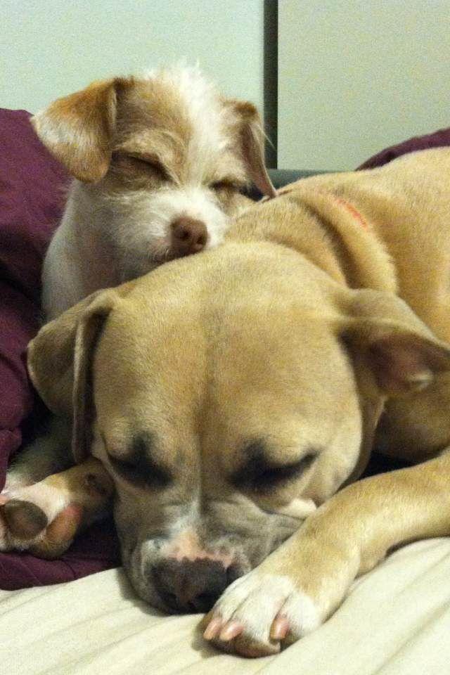 Rosie & Kira napping.
