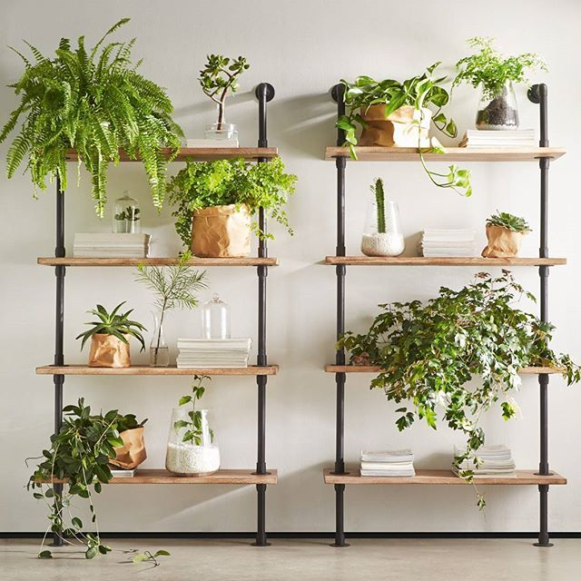 Kitchen Plant Shelf Decorating Ideas: Friday Shelfie. Indoor Plants Add Life To Your Space And