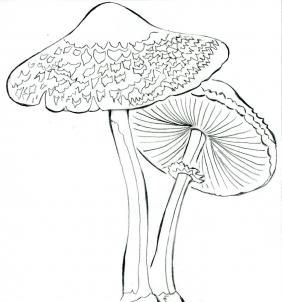 How to Draw Realistic Mushrooms, Step by Step, Realistic