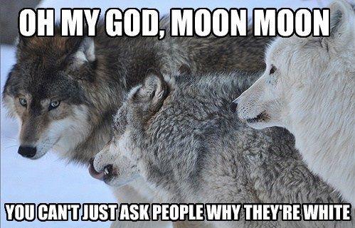 13 Of The Best Memes From 2013 Moon Moon Memes Animal Jokes Best Memes