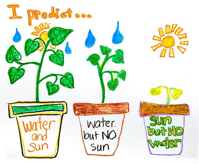What do plants need to grow? Draw predictions and results with ...