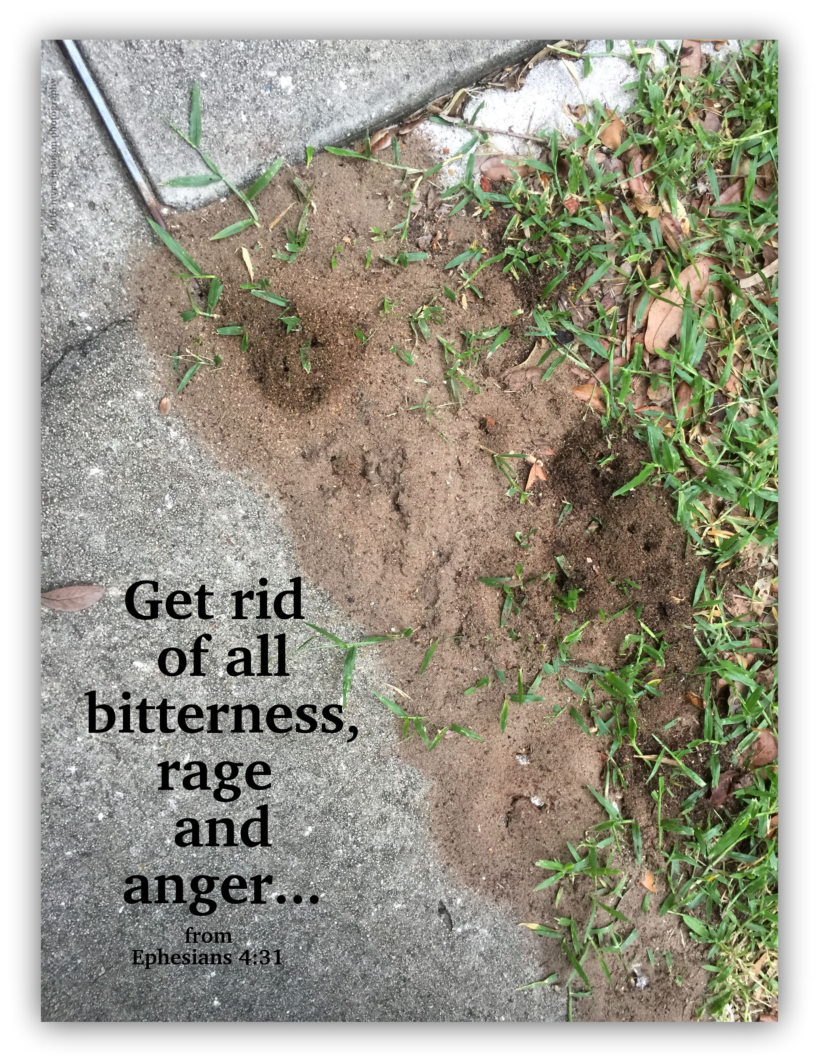 Get rid of all how to dry basil get rid of ants rid