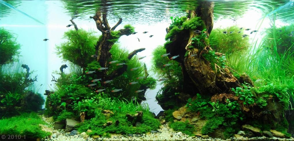17 Best 1000 images about aquariums on Pinterest Aquarium setup Fish