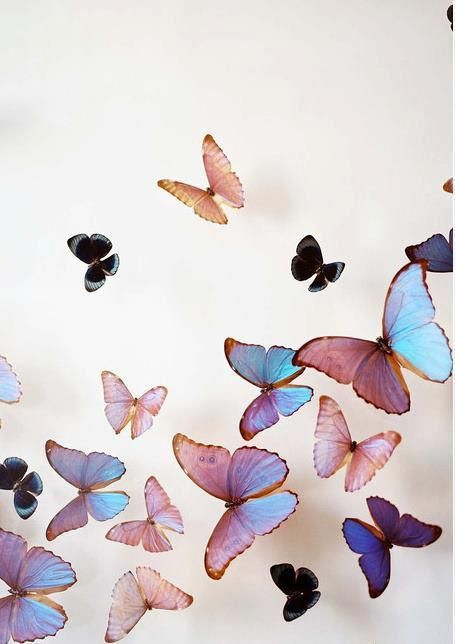 Butterflies in stomache via tumblr flutterby for Flutterby wallpaper