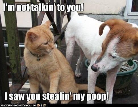 Pin On Lol Animals