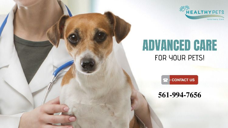 Emergency Vet Delray Beach Veterinary Care Emergency Vet