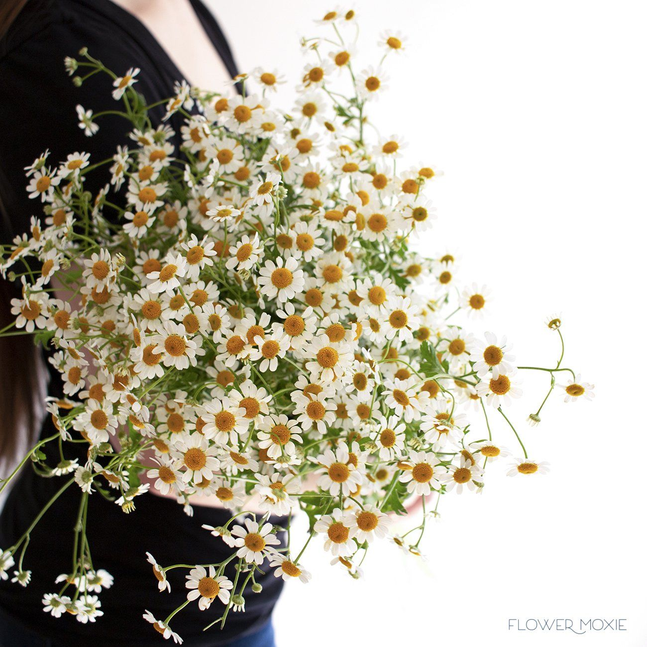 The Perfect Addition To Designs With A Wildflower Vibe Chamomile Looks Like Tiny Daisies Which Provide Amazing Texture Flowers Feverfew Diy Wedding Flowers