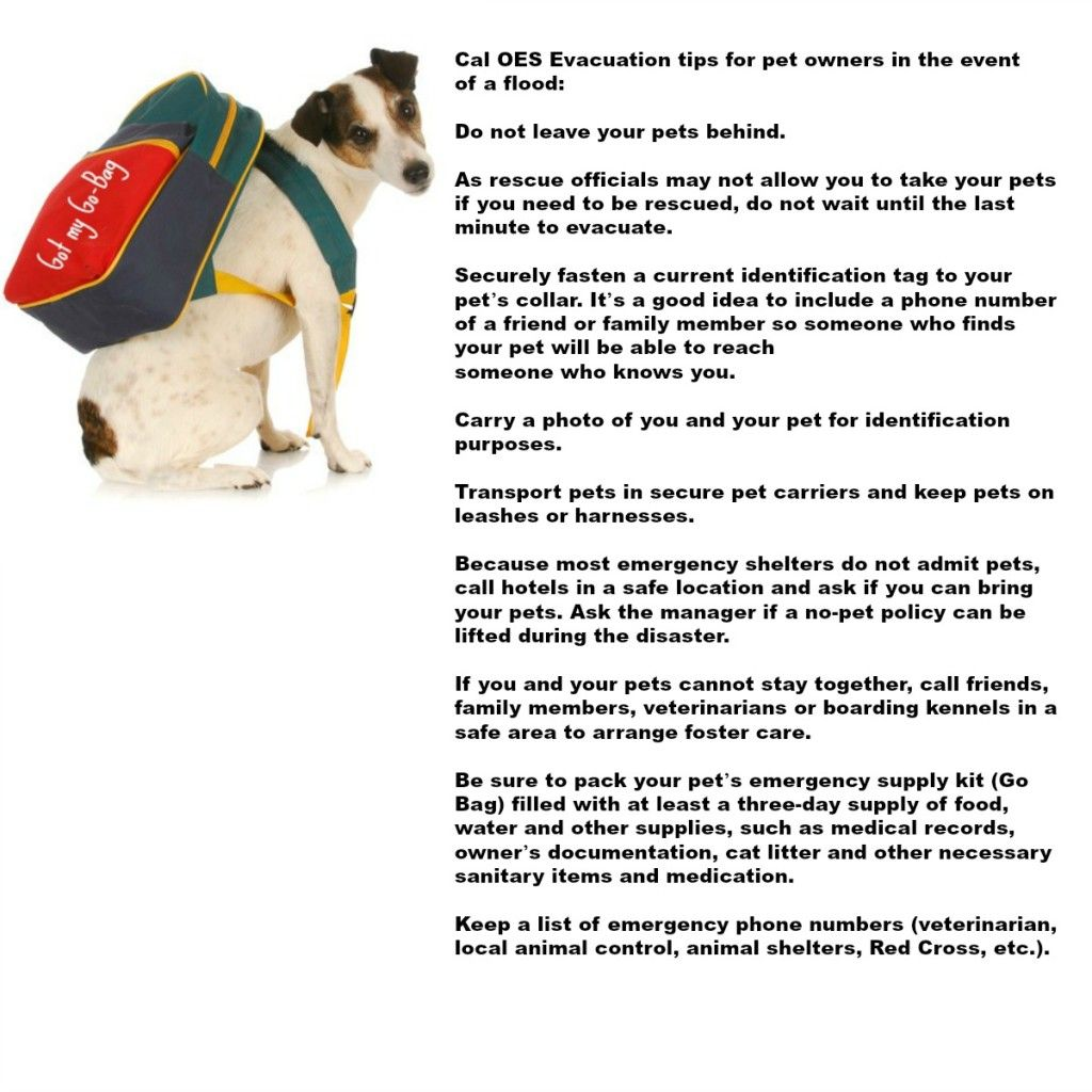 Roseville Area Flood Resources Abound Roseville California Pets Cute Photos