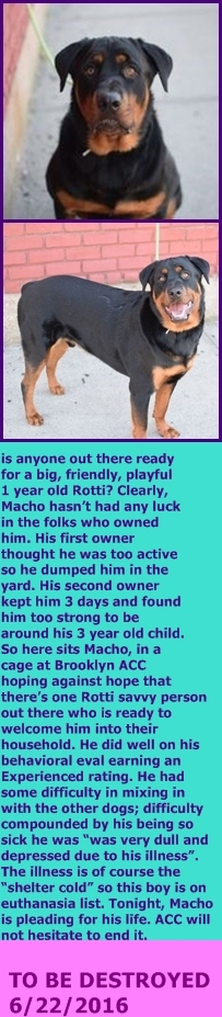 Brooklyn Center My name is MACHO. My Animal ID # is A1077248. I am a neutered male black and tan rottweiler mix. The shelter thinks I am about 1 YEAR I came in the shelter as a STRAY on 06/12/2016 from NY 11236, owner surrender reason stated was TOO BIG. http://nycdogs.urgentpodr.org/2016/06/macho-a1077248/