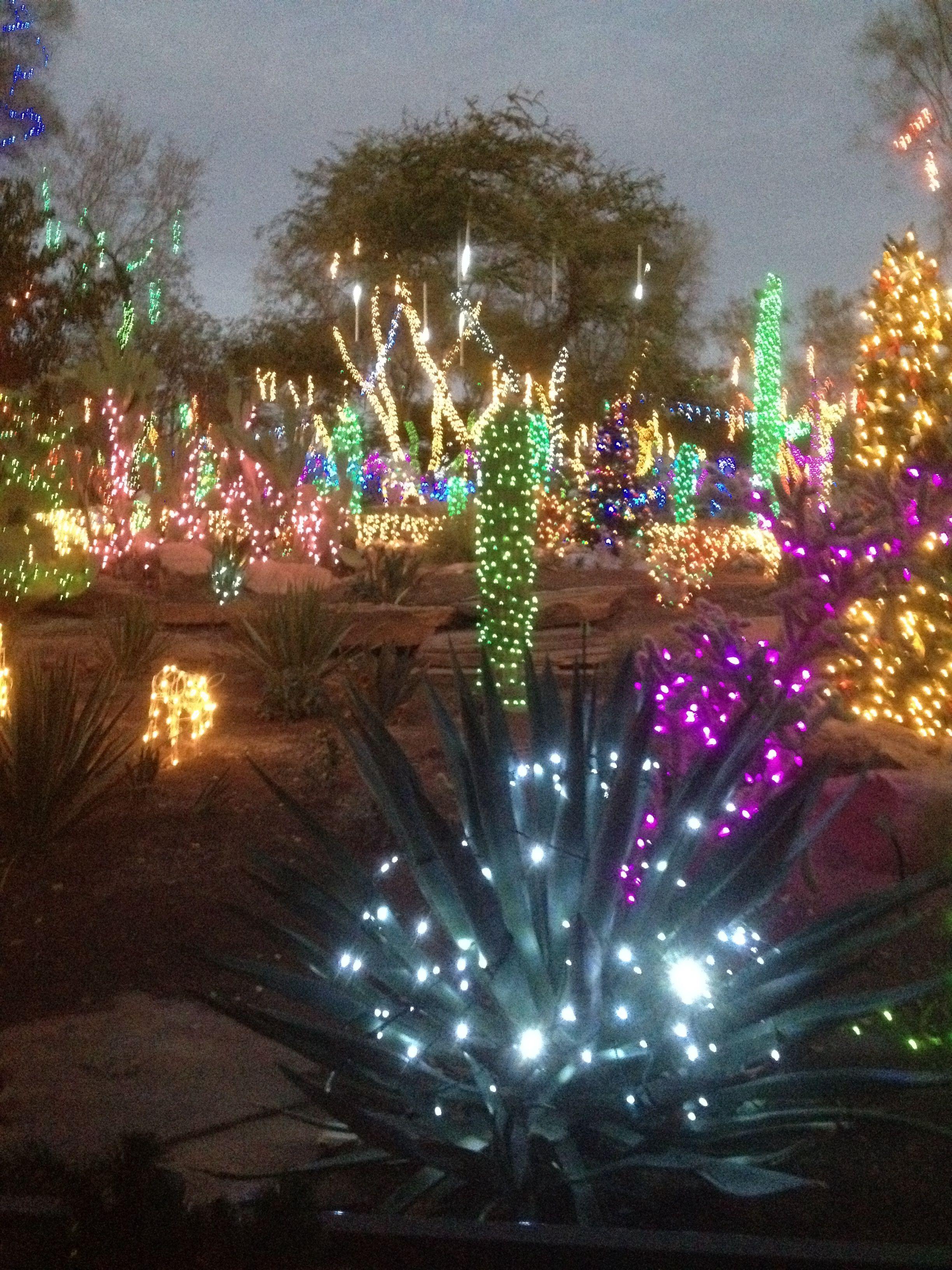 Xmas in Vegas. Cactus garden at Ethel M's Chocolate
