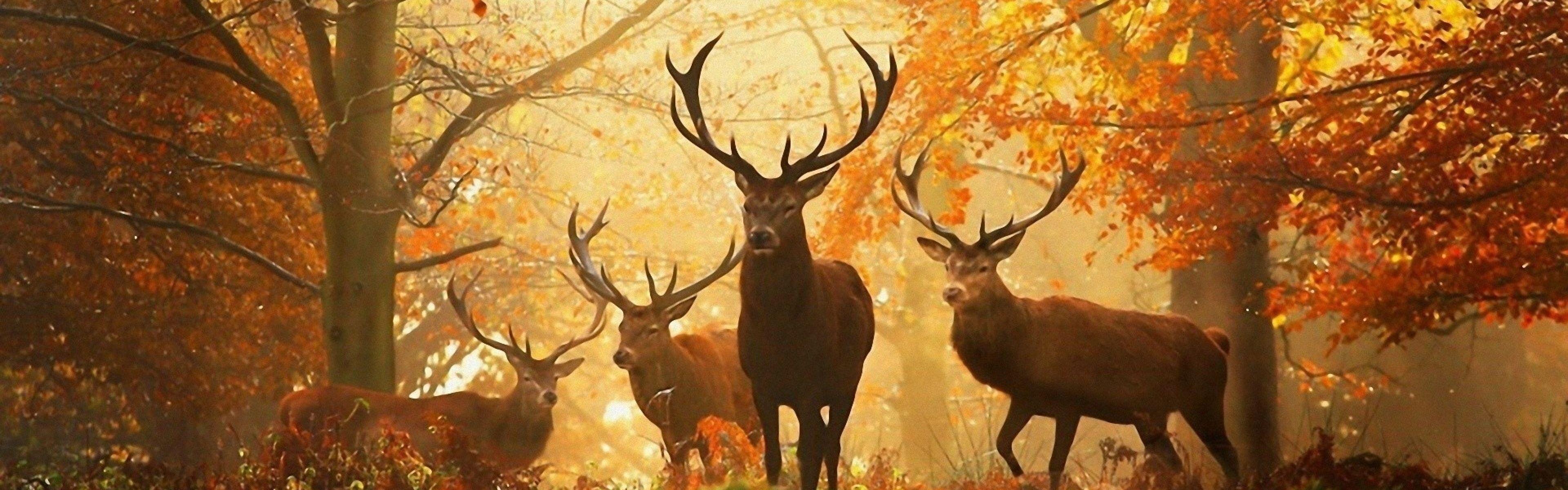 Deer Wallpapers Best Inspirational High Quality Deer