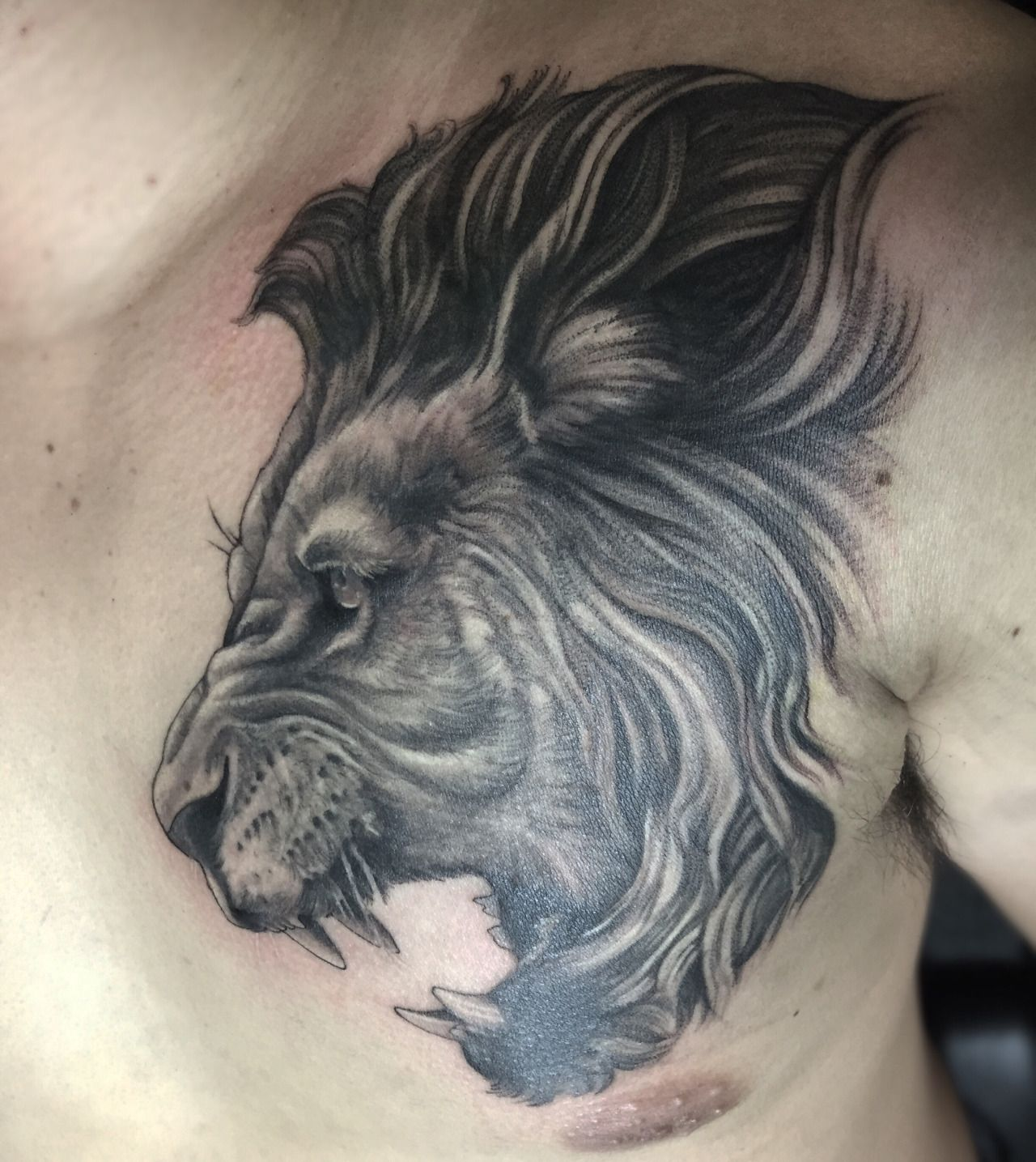 Heart Of A Lion Tattoo Done By Eddie Lee At Ink Shop Tattoo In