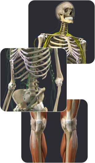 Anatomy ‐ 3D Anatomy on Univadis | clinical work related items ...