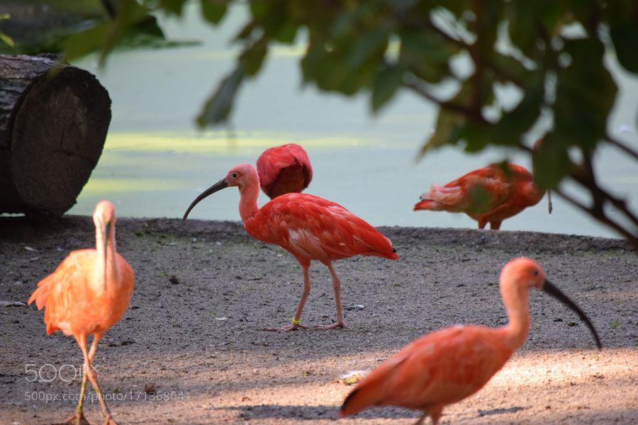 vögel am ufer by michaelsimon4. @go4fotos