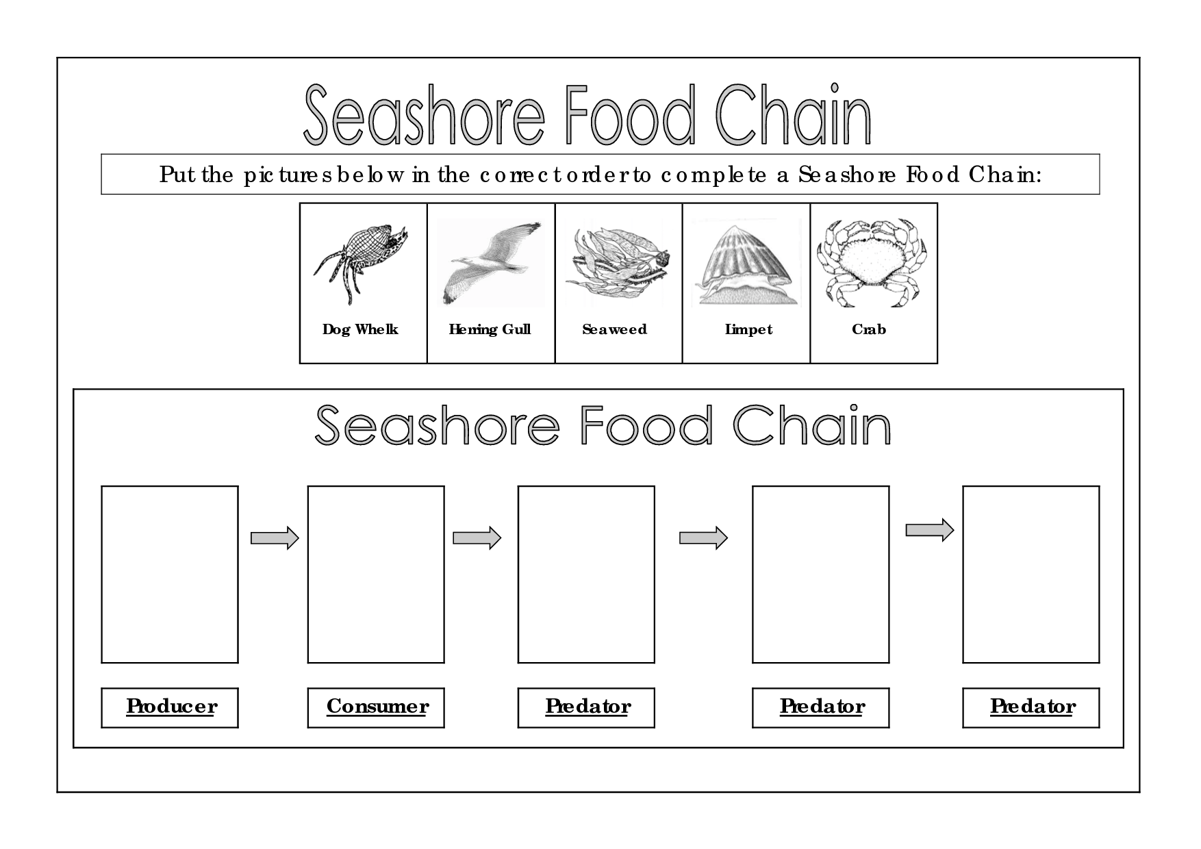 Seashore Food Chain Chains Webs Projects Ideas For Mes Art Tech Kids Learn Circuitry From Blobz And Basic Programming Life Science Apex Predator
