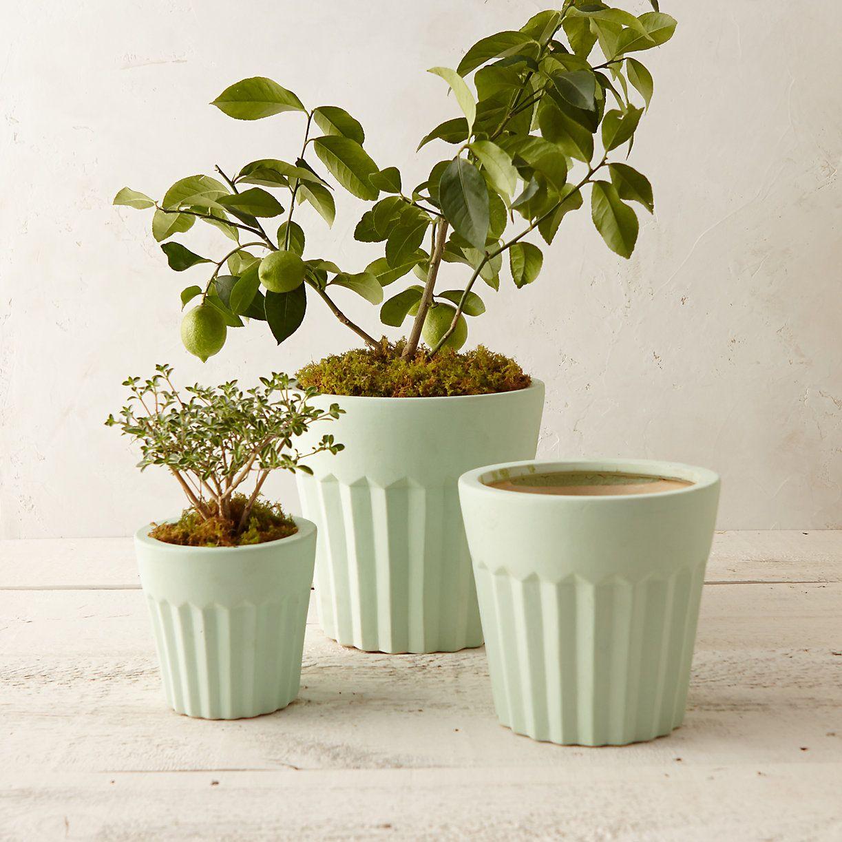 Earthenware Cupcake Pot in New Garden at Terrain