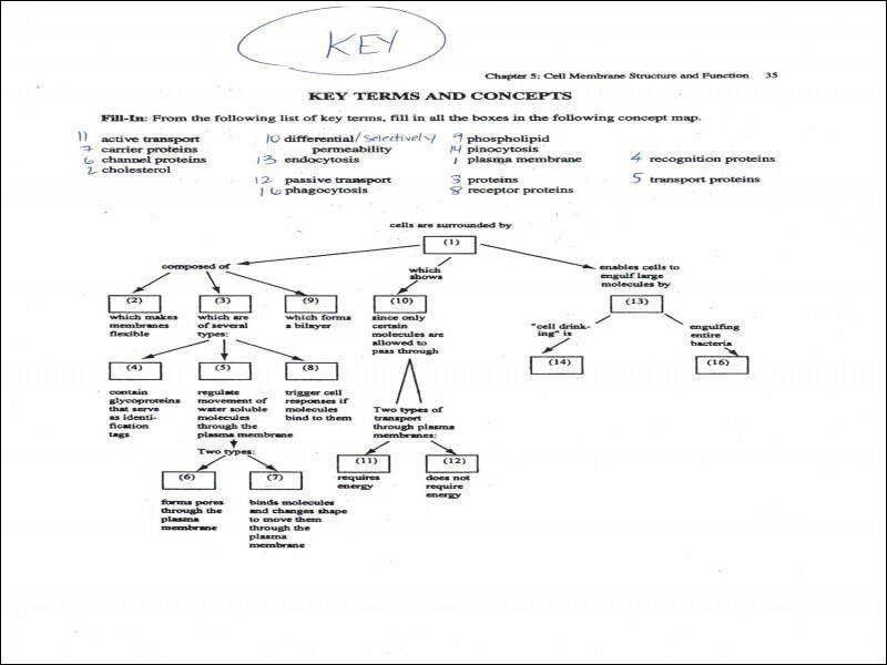 Cell Concept Map Worksheet Answers 12 Cool S Cell Membrane ...