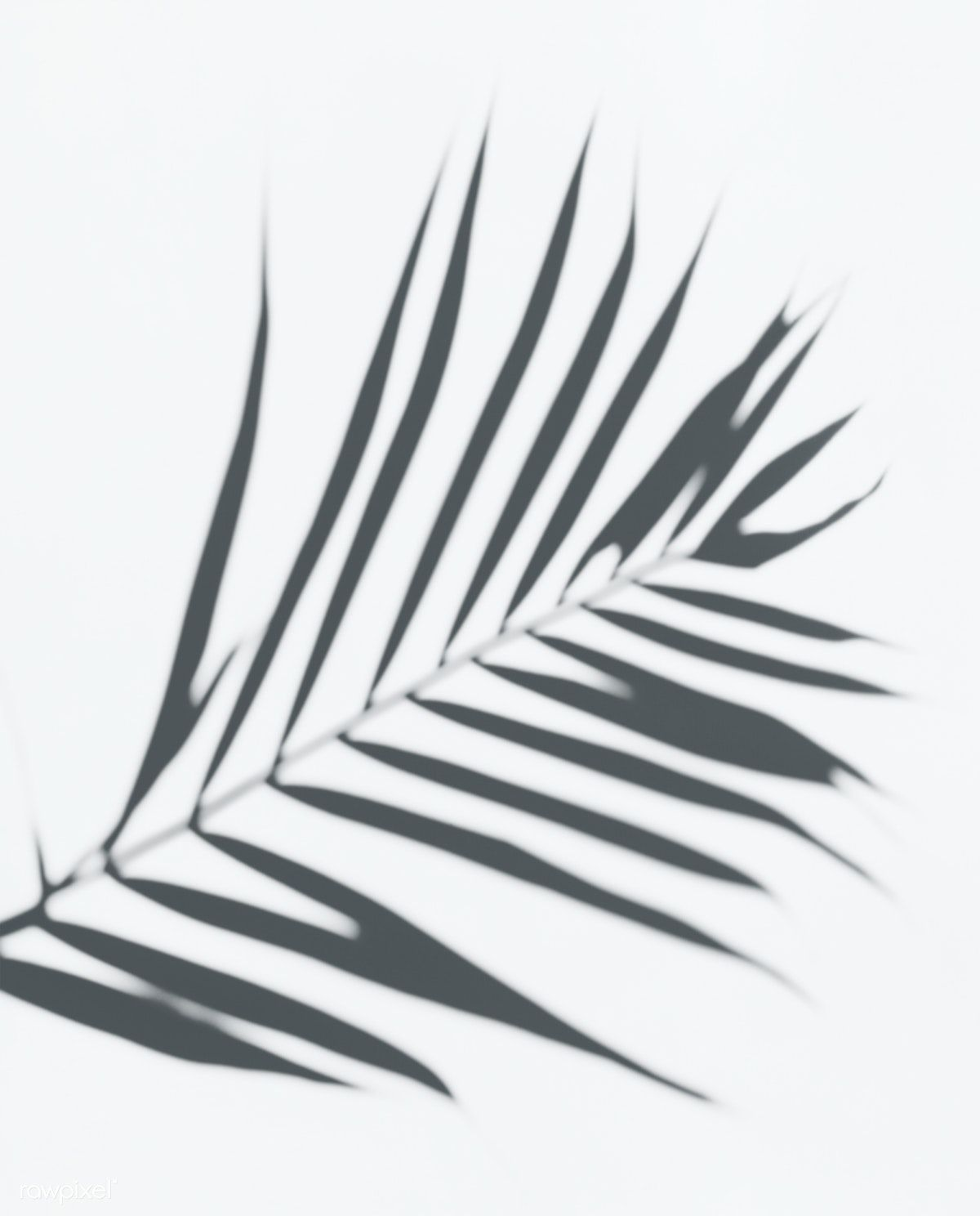 Download Premium Psd Of Shadow Of Palm Leaves On A White Wall 556135 Palm Tree Photography Leaf Photography Shadow