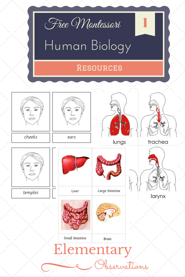 Elementary Observations: Free Human Biology Materials   Science ...