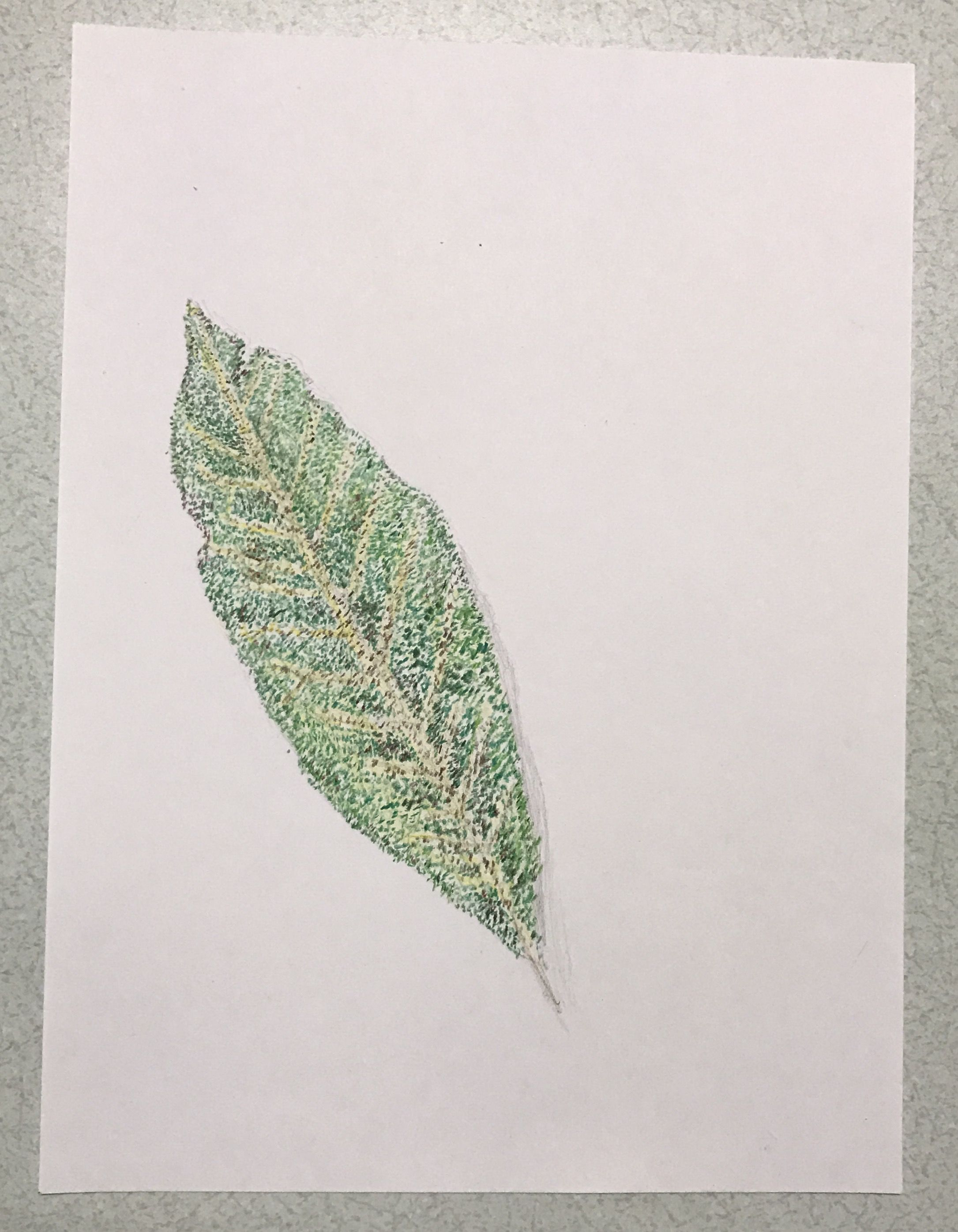 My art assignment was to draw a leaf i chose stippling for my