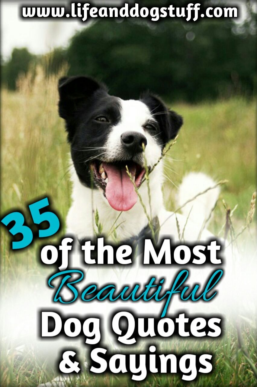 35 Most Beautiful Dog Quotes And Sayings Dog Quotes Most