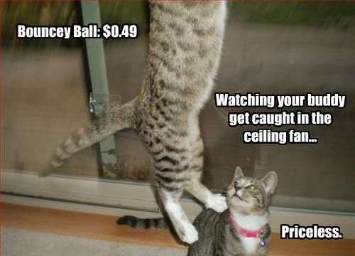 25 hilarious photos of cats stuck in things hilarious cat and 25 hilarious photos of cats stuck in things mozeypictures Image collections