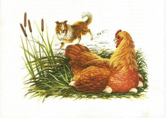 Vintage Animal Print - Dog Print - Collie - Chicken - Book Plate - Vintage Book Print- Readers Digest - Animal Story Book - 1970s
