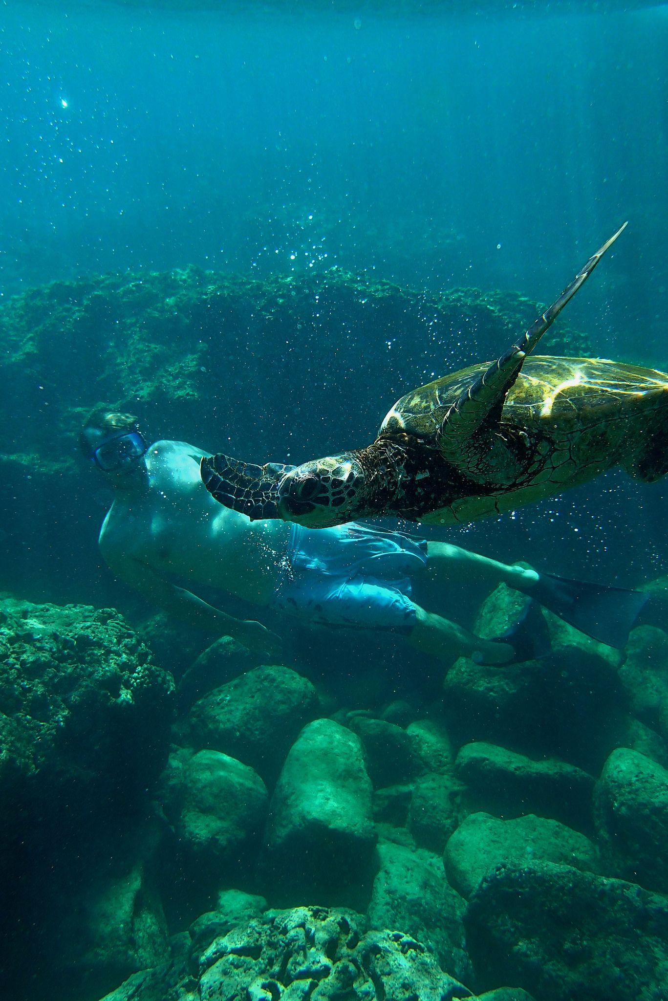 Swimming with Hawaiian Green Sea Turtle