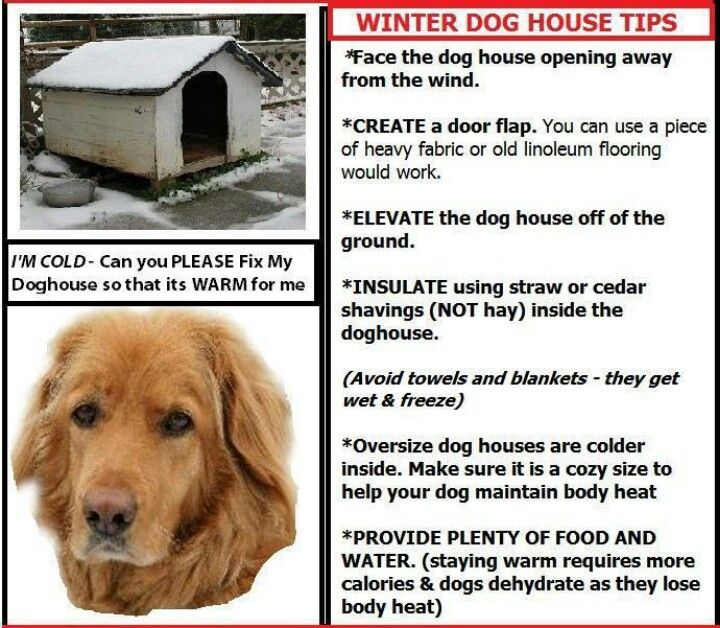 Pin By Pamela Mcgee On Texas In 2019 Winter Dog House