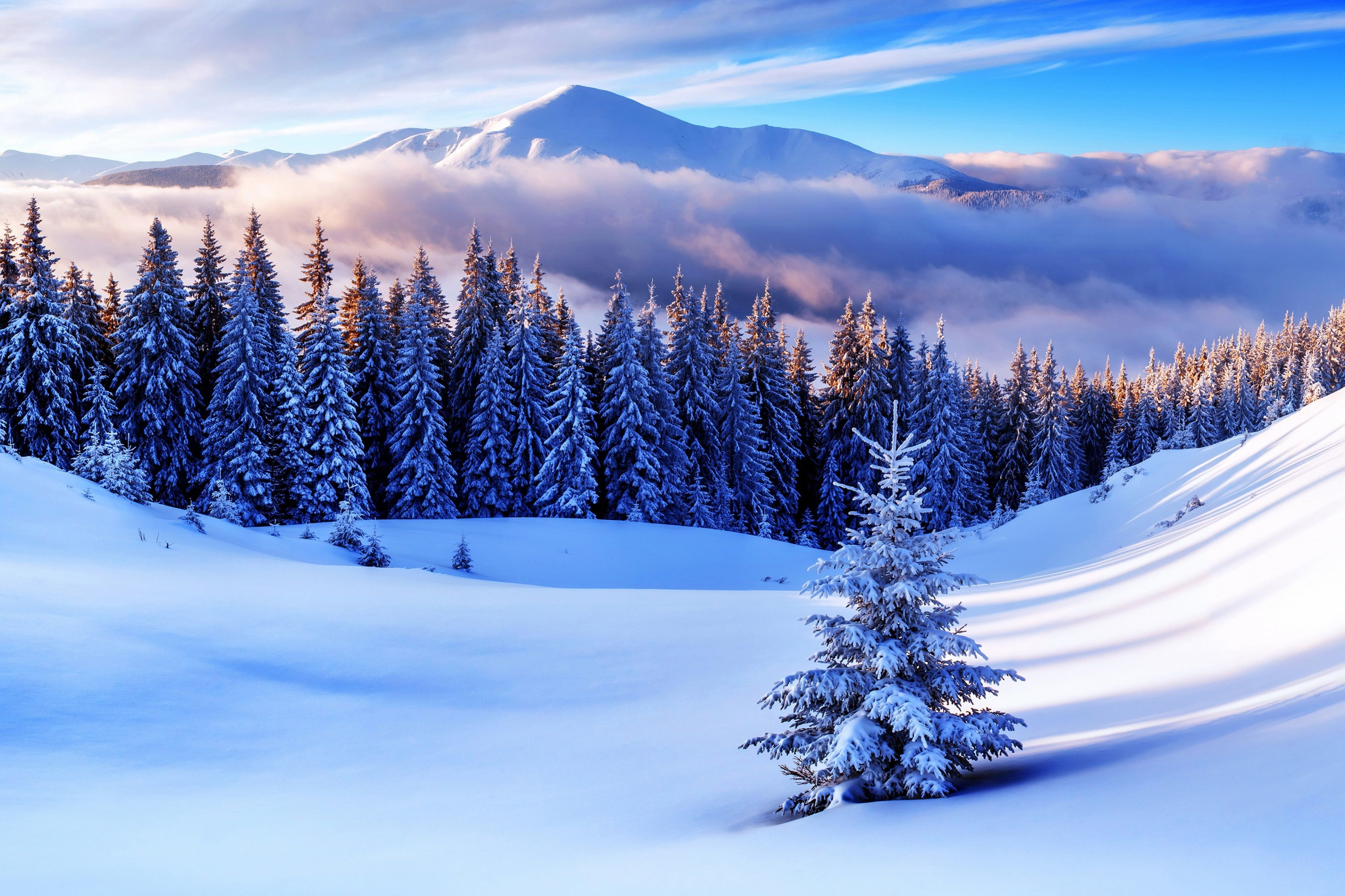 3840x2559 Pine Trees 4k Free Downloads Hd Wallpaper Paisajes De