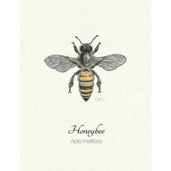 Honey Bee Original Art Print Home Decor For The Naturalist Sacred To