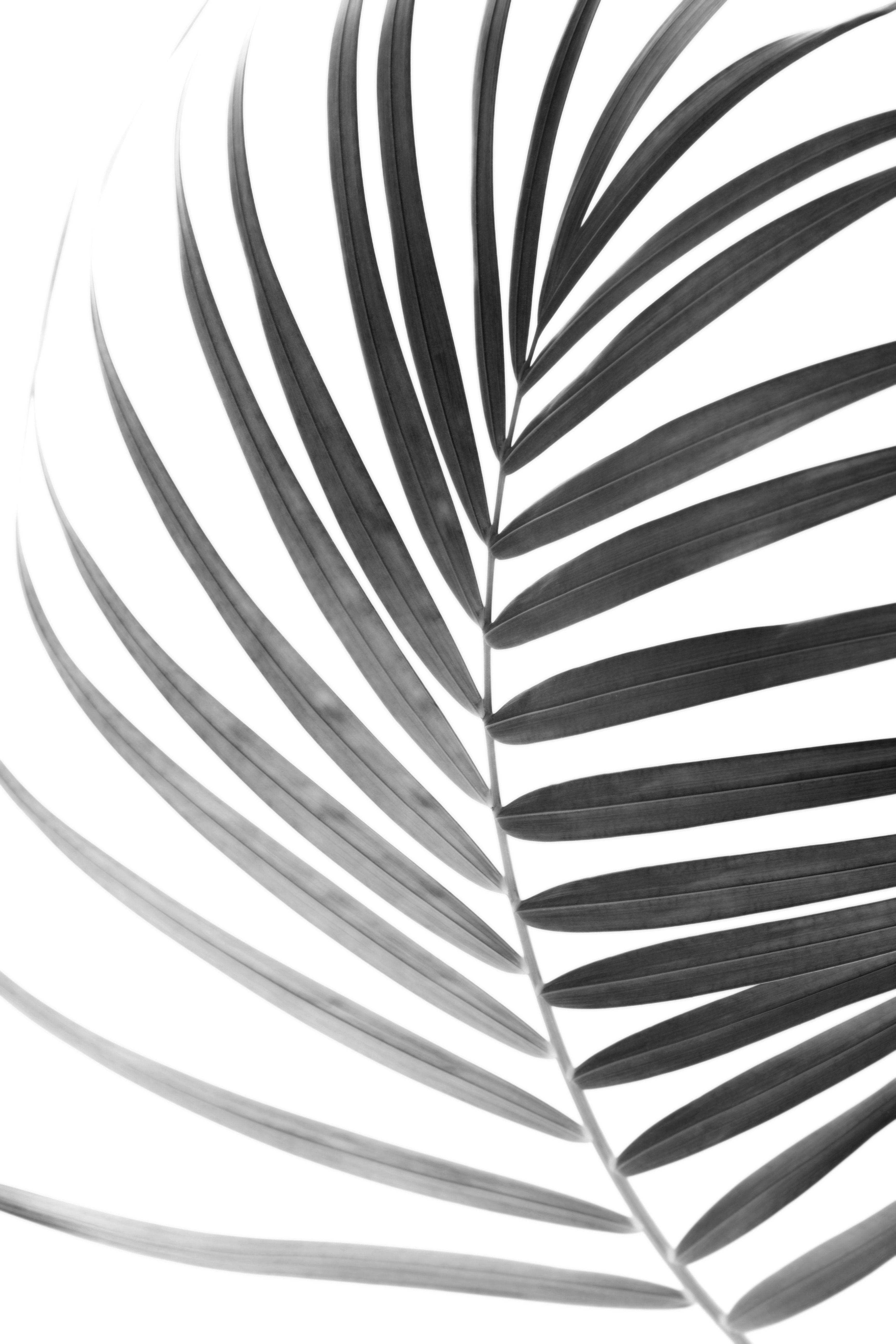 Premium Poster Schwarz Weiß Botanik Poster Schwarz Weiß Bild Grau Schwarz Weiß