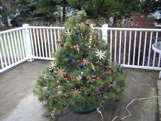 Birdfeeder tree