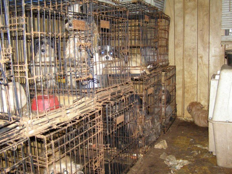 puppy mill cages all galleries >> Puppy Mill