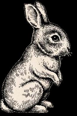 Standing Rabbit Drawing